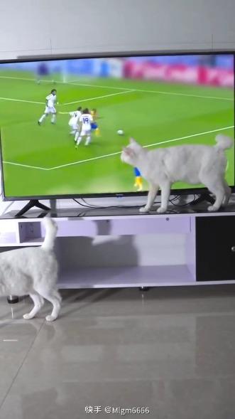 这猫也会魔术? [s-22]