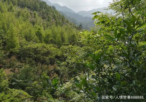 广东罗定市的这个自然环境景区,龙湾生态旅游区
